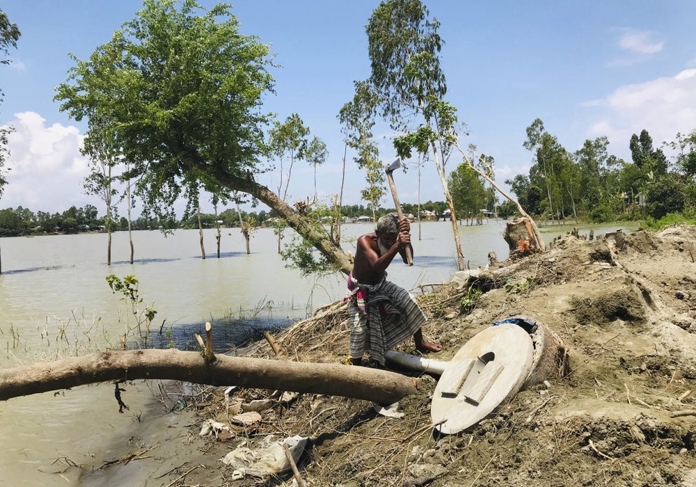 A Bangladeshi elderly person cuts an uprooted tree as the area around him is seen submerged with flooded waters in Manikganj, some 100 kilometers (62 miles) from Dhaka, Bangladesh, Thursday, Aug. 13, 2020.