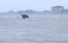 Narayani crosses danger level in Chitwan (with video)