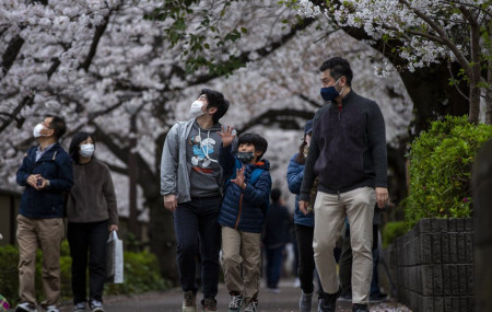 People wearing protective masks to help curb the spread of the coronavirus walk under a canopy of cherry blossoms Sunday, March 28, 2021, in Tokyo.