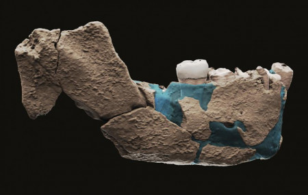This undated image provided by Tel Aviv University in June 2021 shows a virtual reconstruction of a human ancestor mandible found in Nesher Ramla, Israel.