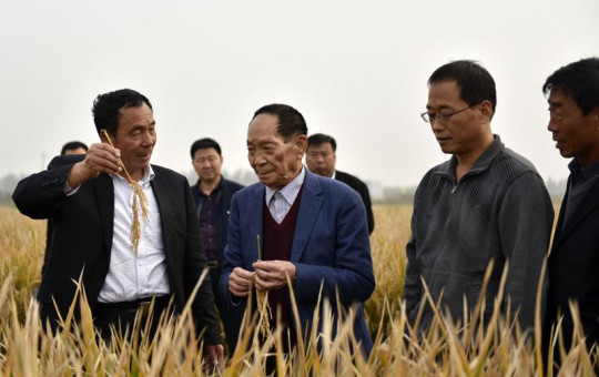 In this Oct. 15, 2017 photo, Yuan Longping, center, stands in a field of hybrid rice in Handan in northern China's Hebei Province.